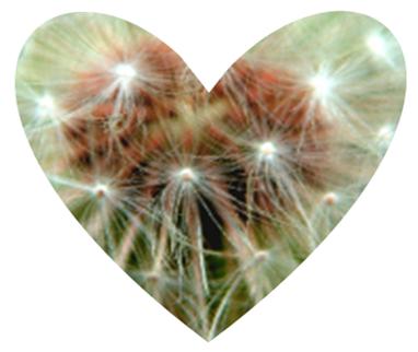 Heart Dandelion