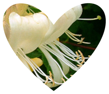 Heart shaped honeysuckle design