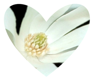 Heart shaped magnolia design