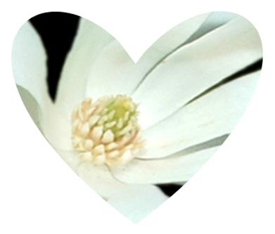 Heart shaped magnolia design