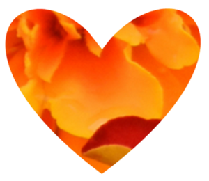 Heart shaped marigold design
