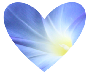 Heart shaped morning glory design