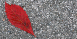 Dark red leaf on asphalt