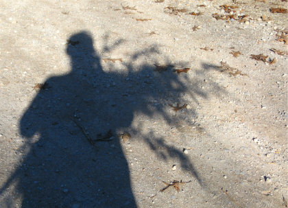 Shadow of woman holding branches