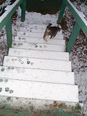 Cat on snowy stairs