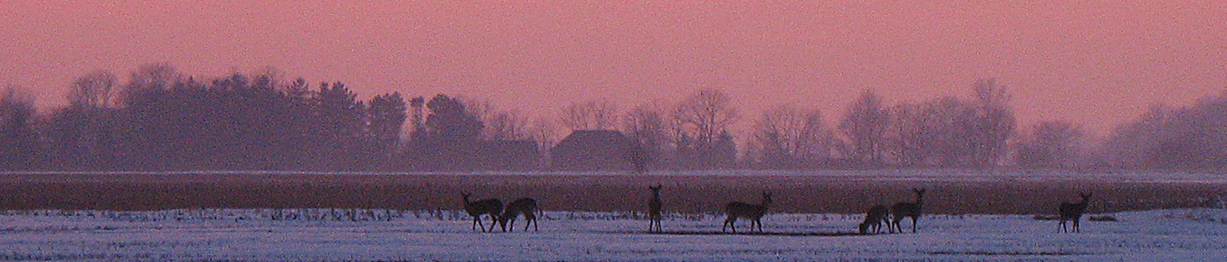 Winter sunset with deer
