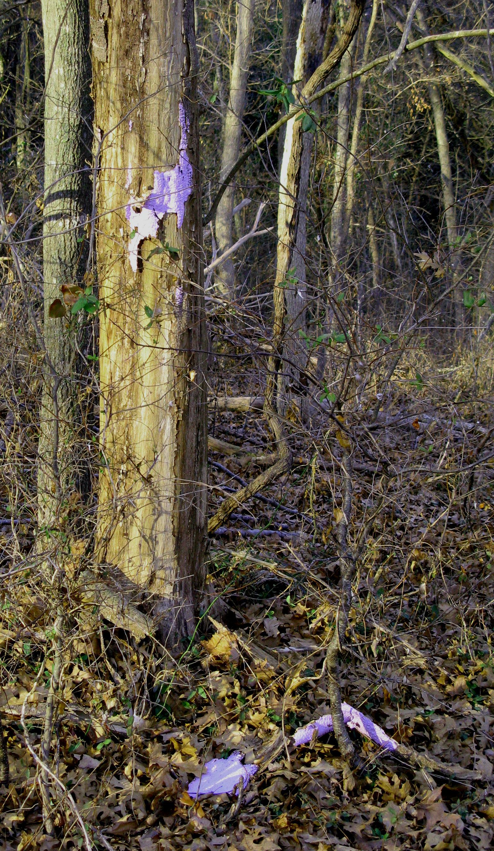 Purple paint on tree trunk