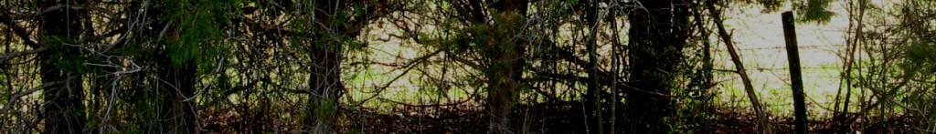 Cedar-lined fence row