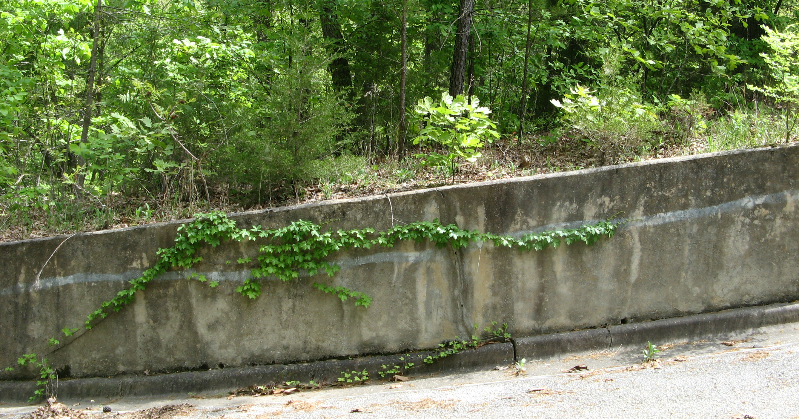 Garland on retaining wall