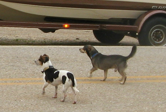 Boat ramp dogs