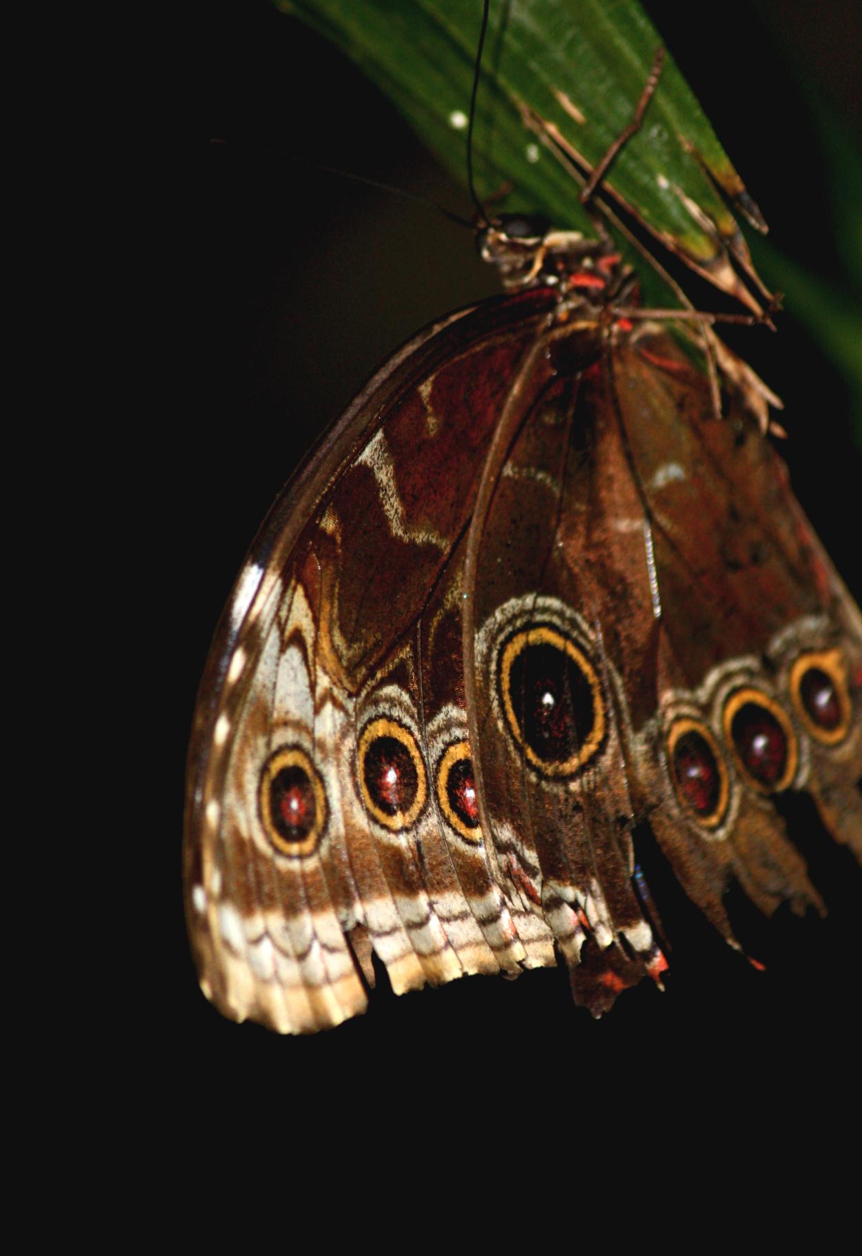 Nature eyes