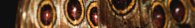 Nature eyes banner graphic